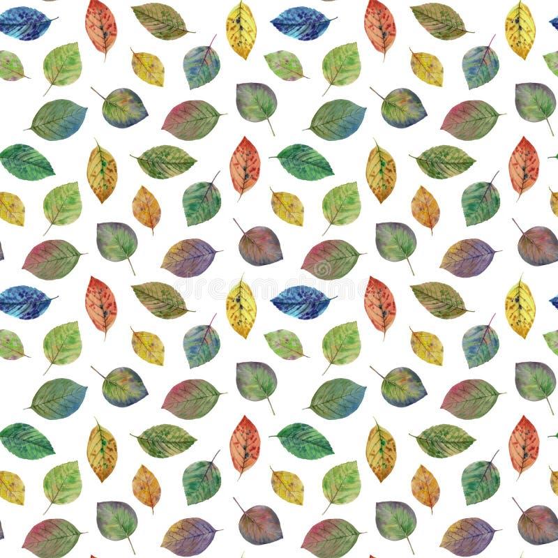 Folhas legantes para design Folhas coloridas do outono Padrão de folhas sem costura ilustração stock