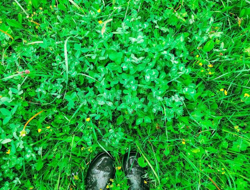 Folhas molhadas bonitas no parque do verão com gotas da água após a chuva e botas de borracha verdes no fundo da grama foto de stock