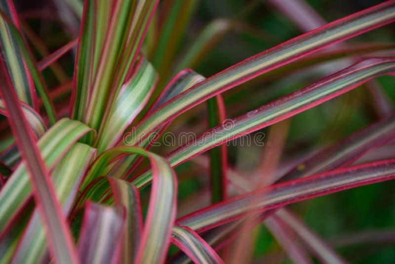 folhas Mult-coloridas imagens de stock