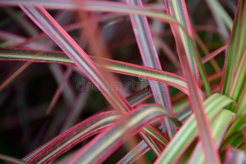 folhas Mult-coloridas imagem de stock royalty free