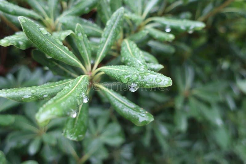 Folhas na chuva fotos de stock royalty free
