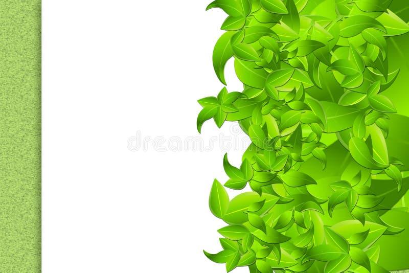 Folhas na estrutura branca imagens de stock
