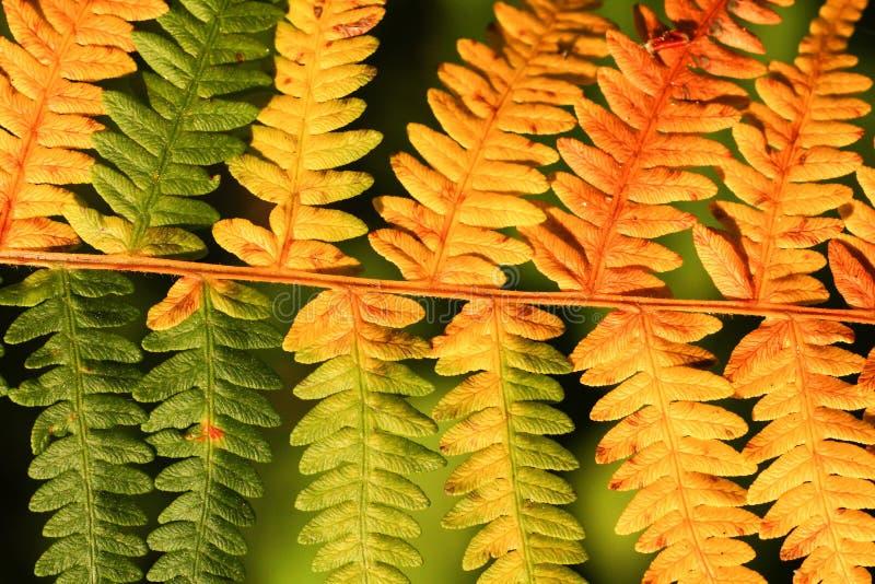 Folhas na floresta do outono fotos de stock