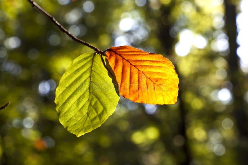Folhas na floresta na harmonia imagem de stock