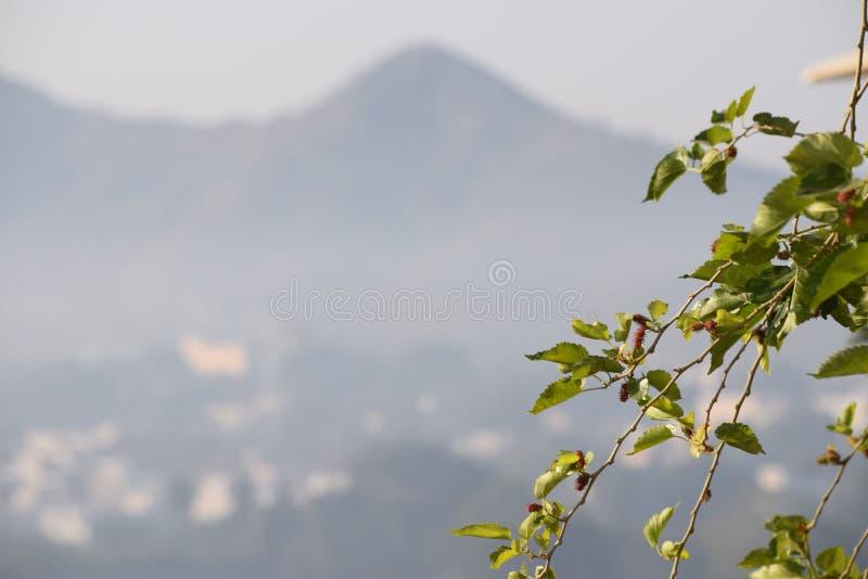 Folhas na luz solar fotos de stock royalty free