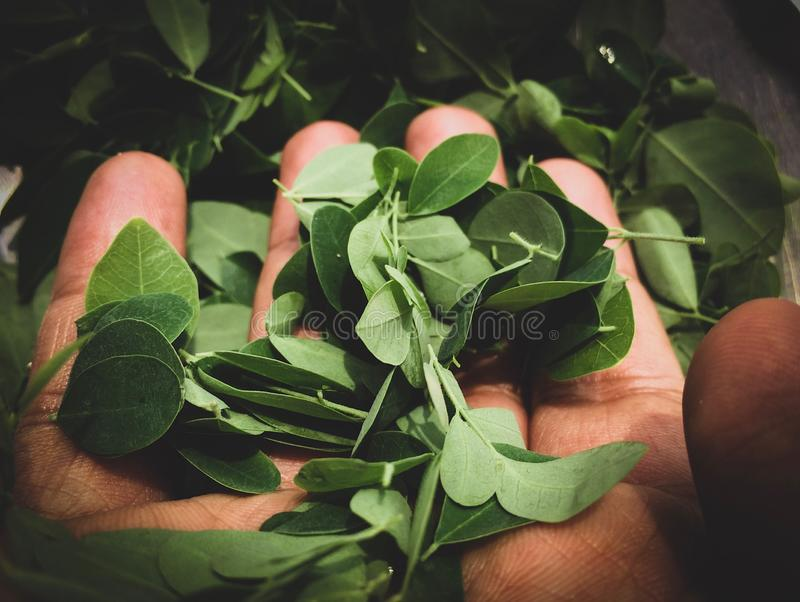 Folhas na mão Vá verde! Ambiente de salvaguarda, salvo nossa Mãe Terra imagens de stock royalty free