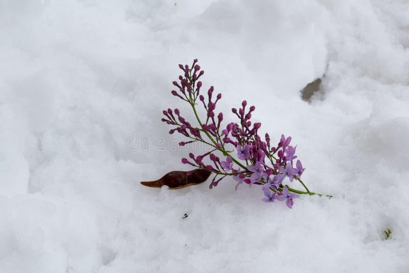 Folhas na neve imagens de stock