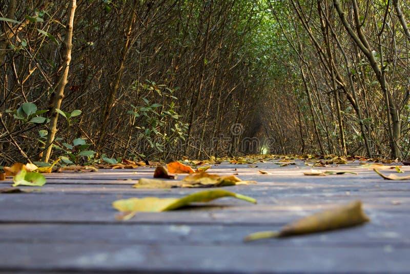 Folhas na ponte do caminho fotografia de stock