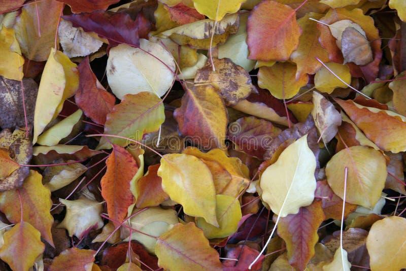 Download Folhas na terra foto de stock. Imagem de queda, vermelho - 63494