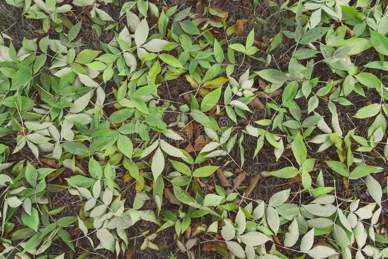 Folhas na terra no outono da queda antes de girar o marrom fotos de stock