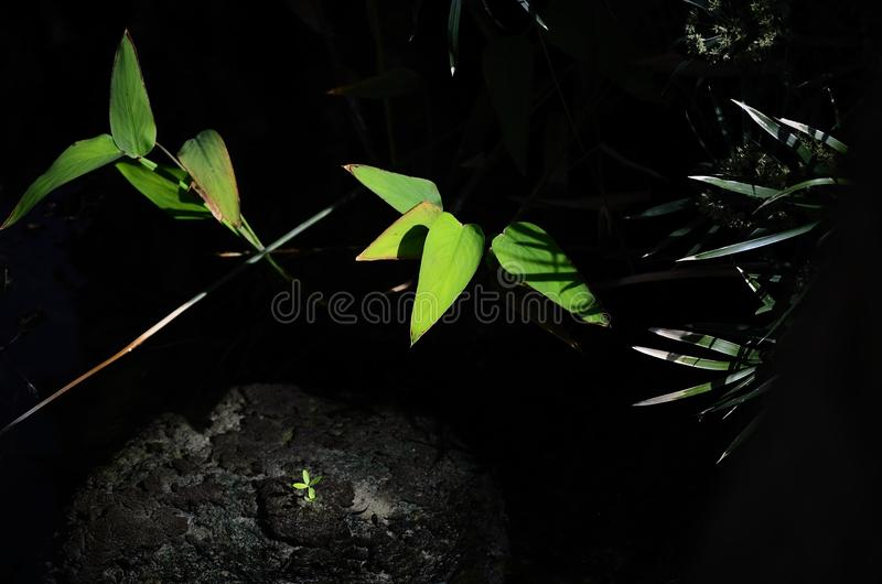 Folhas no deserto fotos de stock royalty free