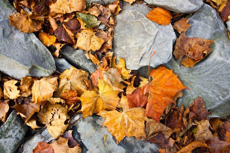 Folhas no groung fotografia de stock