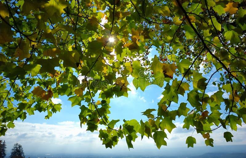 Folhas no luminoso foto de stock royalty free