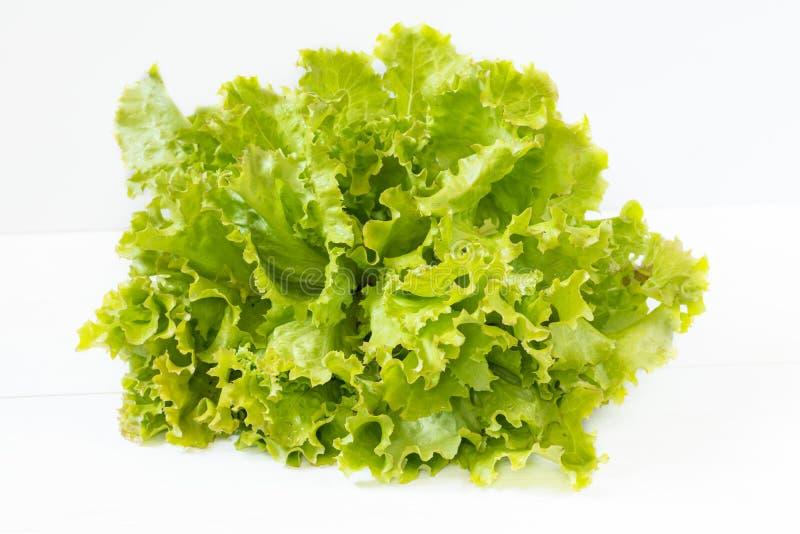 Folhas orgânicas frescas da alface verde de Frisee fotografia de stock royalty free
