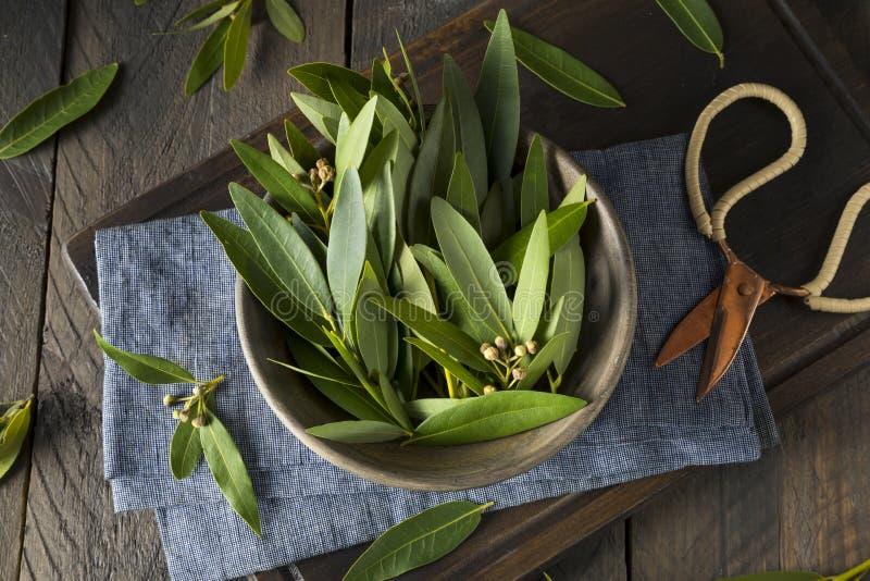 Folhas orgânicas frescas do Green Bay foto de stock royalty free