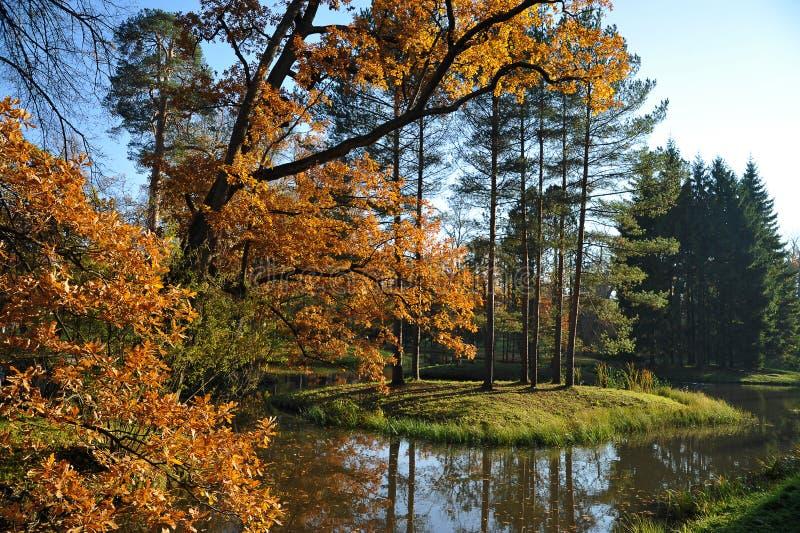 Folhas paisagem-amarelas do carvalho do outono sobre o lago foto de stock