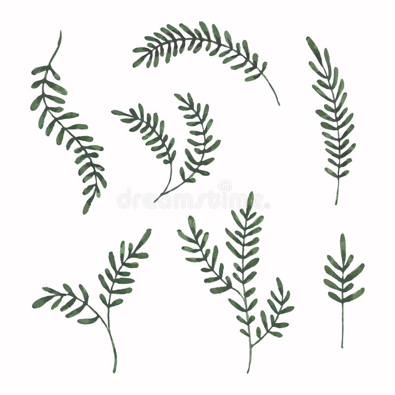 Folhas pintadas aquarela ajustadas Formas da variedade da folha tirada mão Projeto floral do elemento ilustração stock