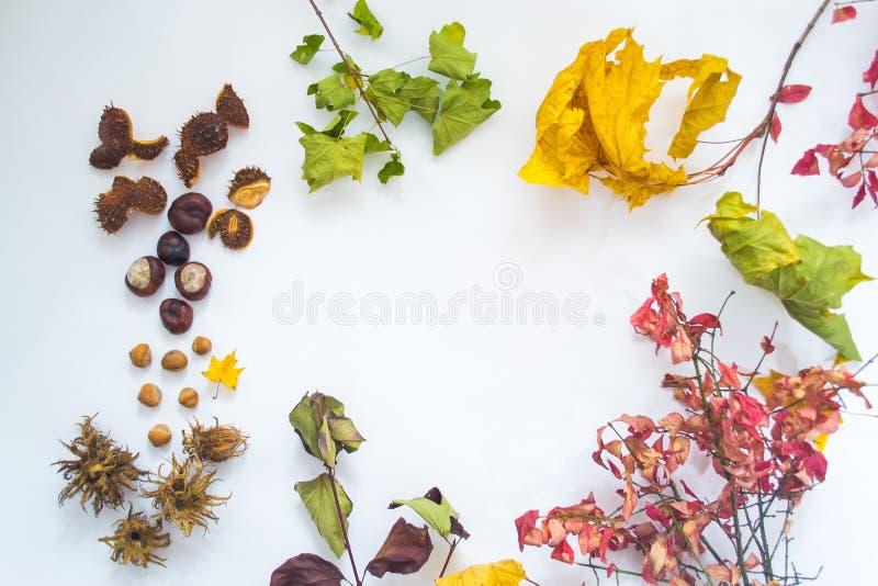 Folhas, porcas e castanhas de outono em um fundo branco foto de stock royalty free