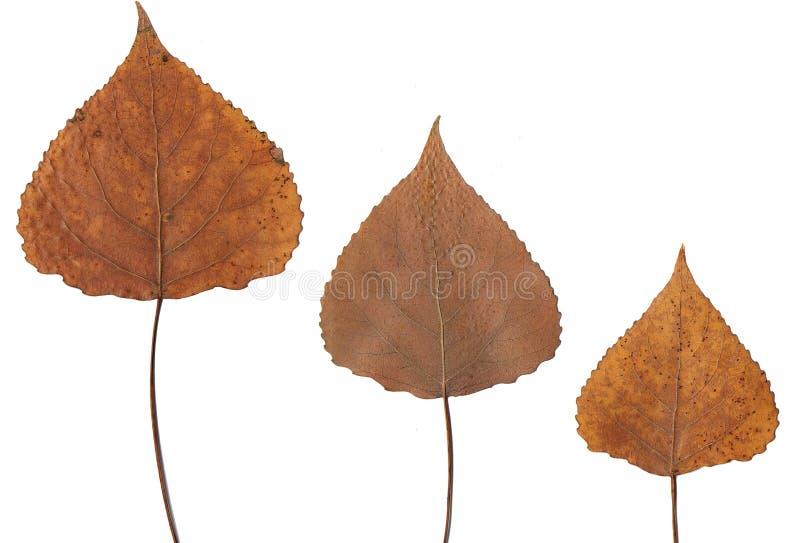 Folhas pressionadas imagens de stock