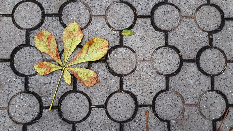 Folhas secadas da árvore de castanha caídas nas telhas à terra com teste padrão geométrico dos círculos fotos de stock royalty free