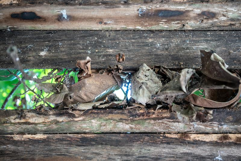 Folhas secadas na parede de madeira velha contra o fundo verde imagens de stock