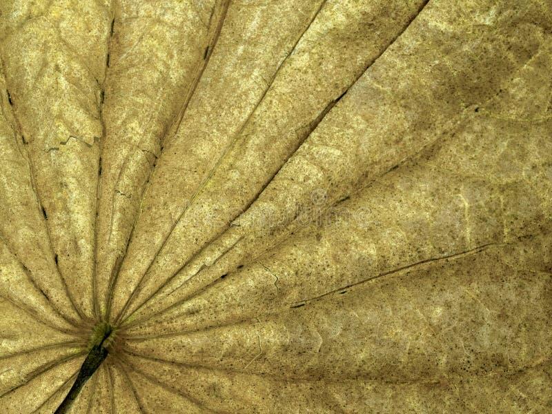 Folhas secas amarelas naturais detalhes e muito fundos alto-res finos imagens de stock royalty free