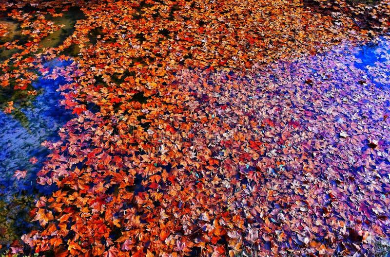 Folhas secas da água fotos de stock royalty free