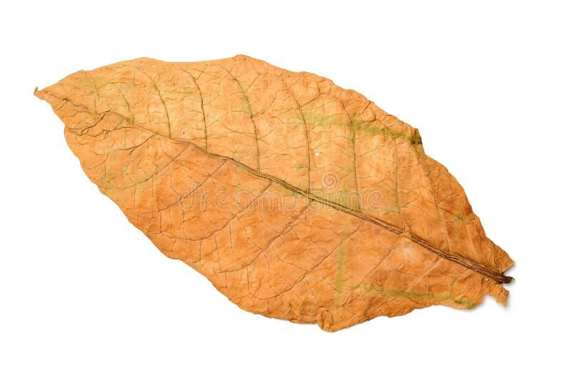 Folhas secas do tabaco imagens de stock