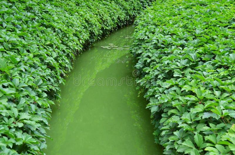 Folhas selvagens da videira sobre o rio imagens de stock royalty free