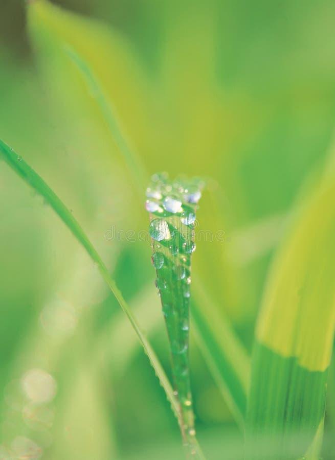 Folhas sob Waterdrops fotografia de stock