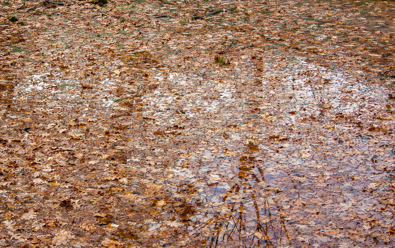 Folhas sobre a textura da água imagem de stock royalty free