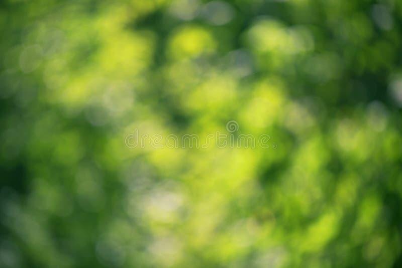 Folhas suculentas do verde de Bokeh fotos de stock