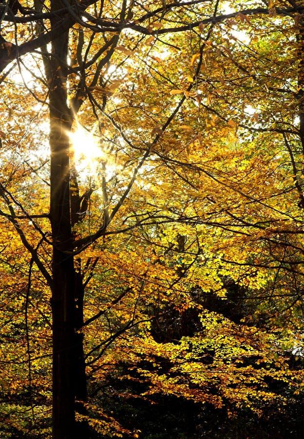 Folhas Sunlit fotos de stock royalty free