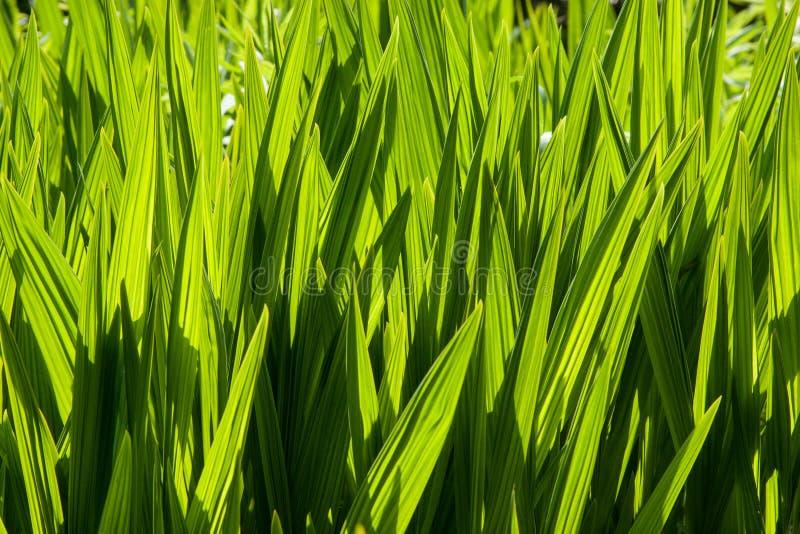 Folhas Sunlit imagem de stock