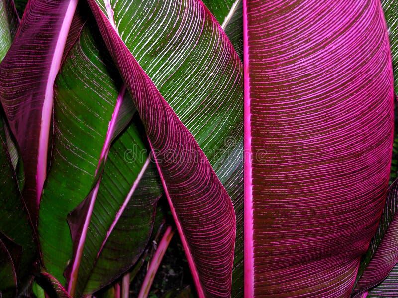 Folhas tropicais foto de stock