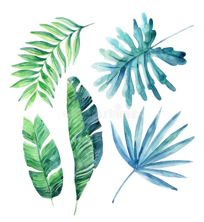 Folhas tropicais da aquarela ajustadas ilustração do vetor