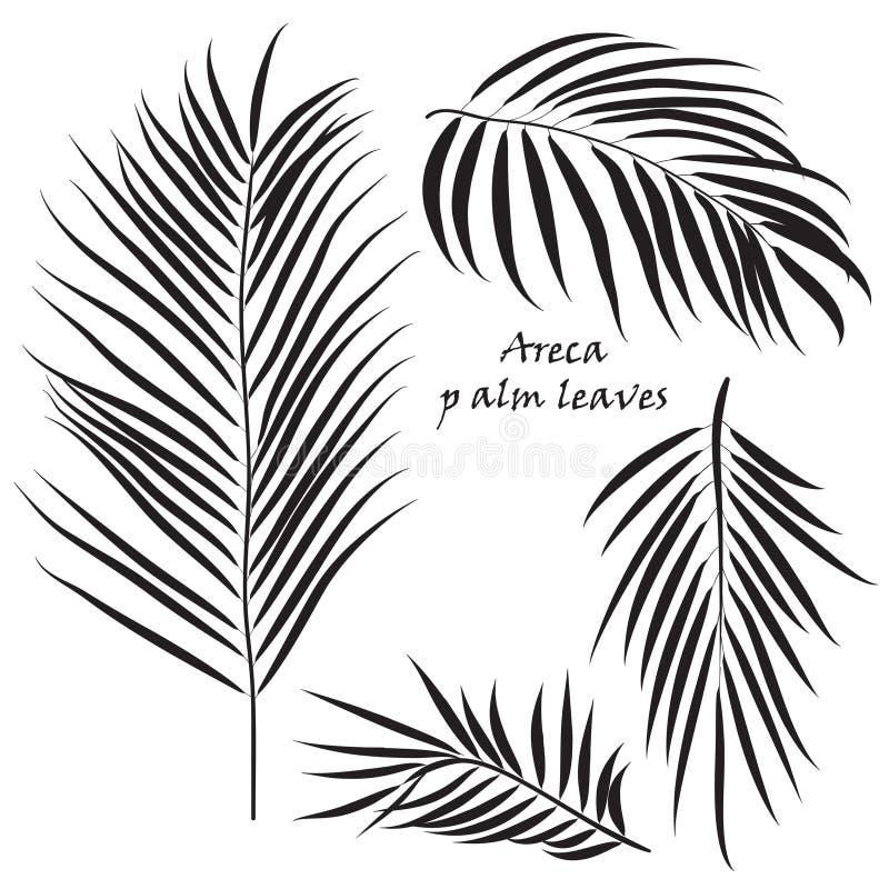 Folhas tropicais da areca da palma do ramo nas cores pretas, isoladas no fundo branco ilustração do vetor