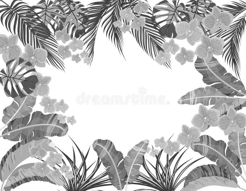 Folhas tropicais da banana, do coco, do monstera e do ogawa, orquídea cor-de-rosa na versão preto e branco Lugar para anunciar ilustração do vetor