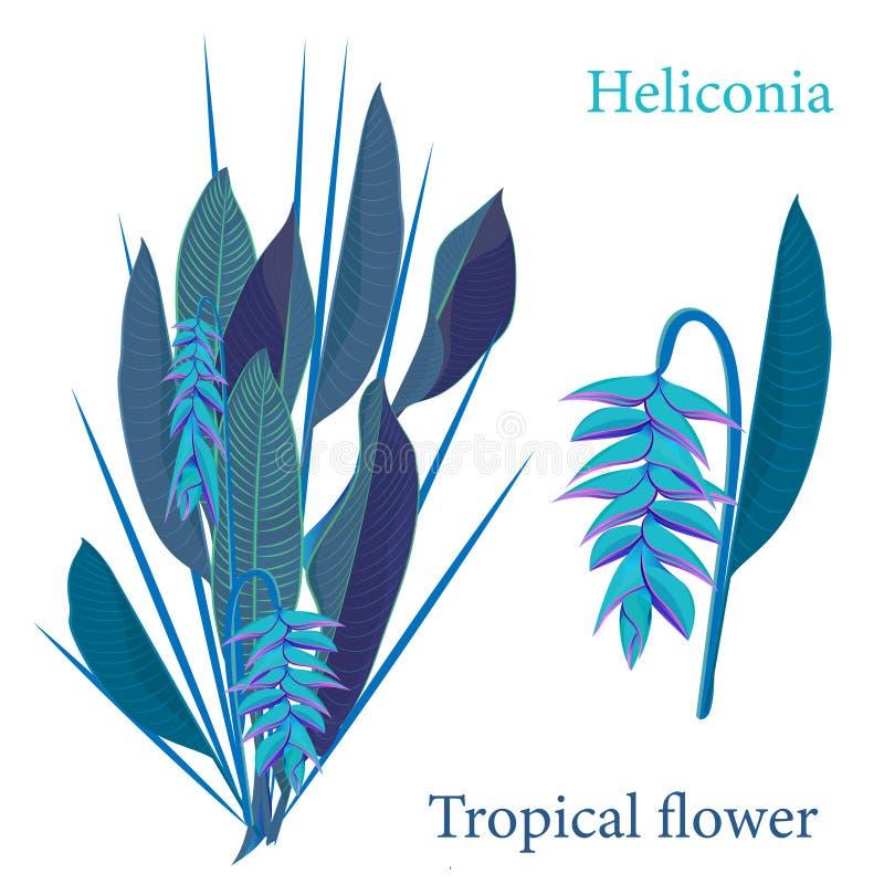Folhas tropicais da flor do heliconia do ramo Desenho realístico da aquarela no estilo liso da cor Isolado no fundo branco ilustração royalty free