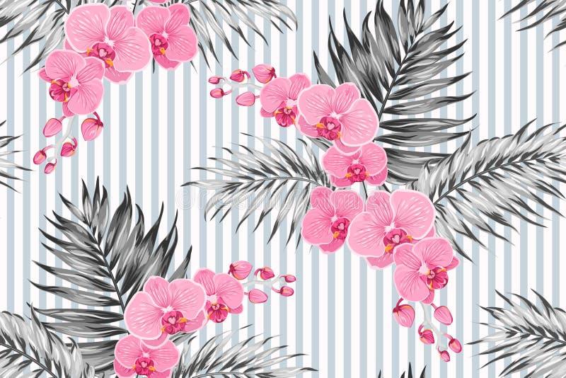 Folhas tropicais da palmeira da selva das flores exóticas roxas cor-de-rosa do phalaenopsis da orquídea Listras verticais do fund ilustração stock