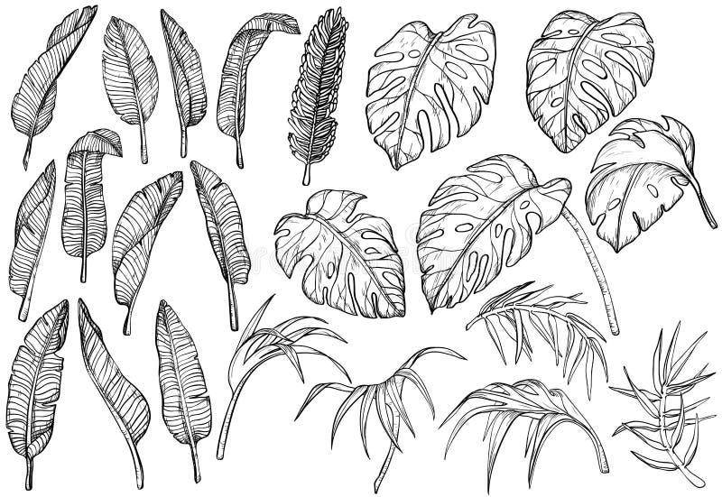 Folhas tropicais da selva ajustadas ilustração royalty free