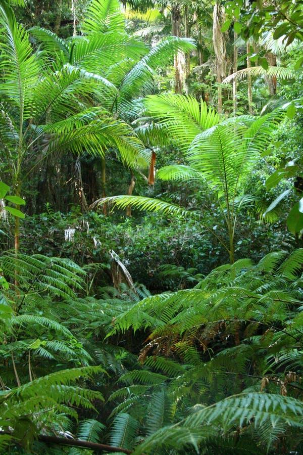 Folhas tropicais do verde foto de stock