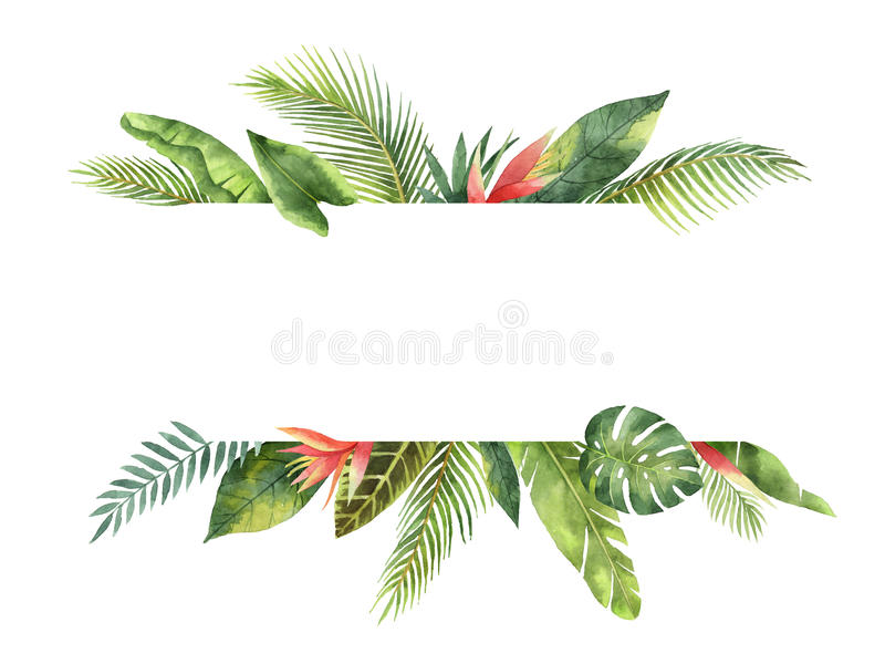 Folhas tropicais e ramos da bandeira da aquarela isolados no fundo branco ilustração do vetor