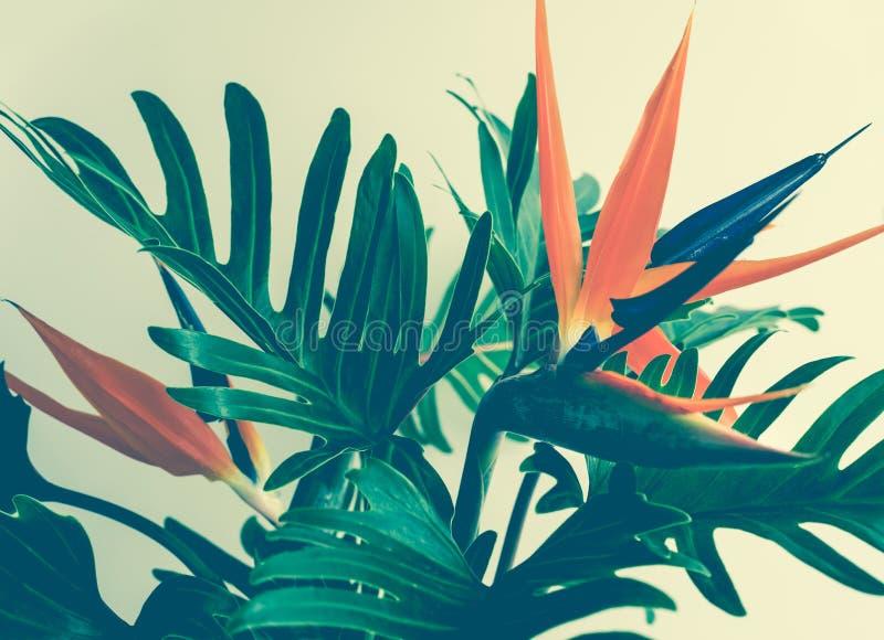 Folhas tropicais exóticas do strelizia e do xanadu da flor fotografia de stock royalty free