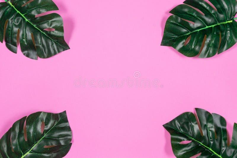 Folhas tropicais Monstera no fundo cor-de-rosa Configura??o lisa, vista superior imagens de stock royalty free