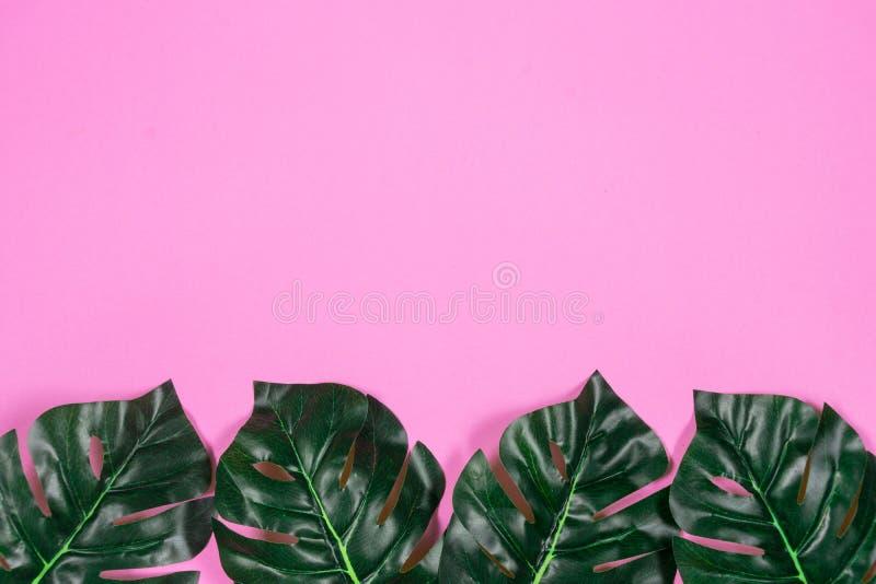 Folhas tropicais Monstera no fundo cor-de-rosa Configura??o lisa, vista superior foto de stock royalty free