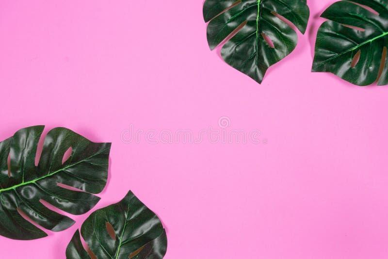 Folhas tropicais Monstera no fundo cor-de-rosa Configura??o lisa, vista superior fotos de stock