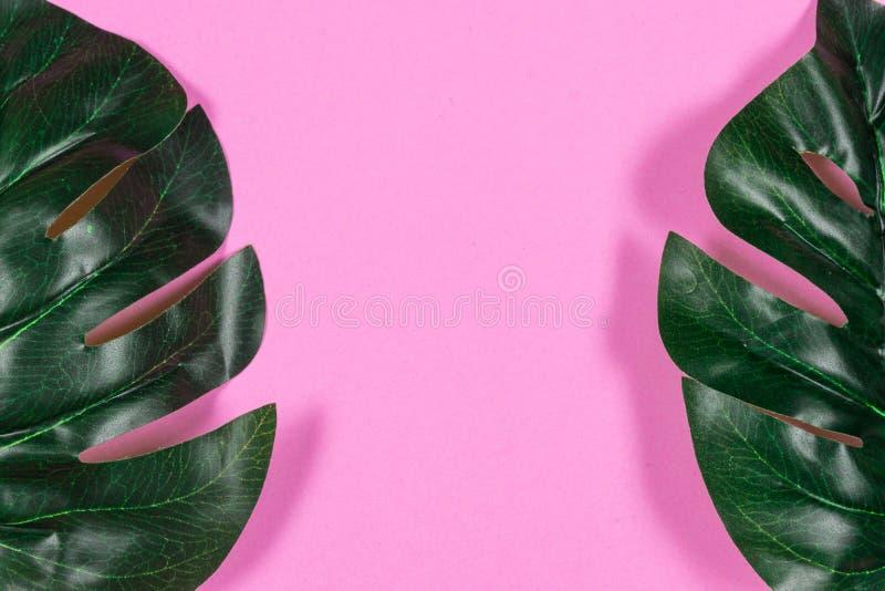 Folhas tropicais Monstera no fundo cor-de-rosa Configura??o lisa, vista superior imagem de stock royalty free