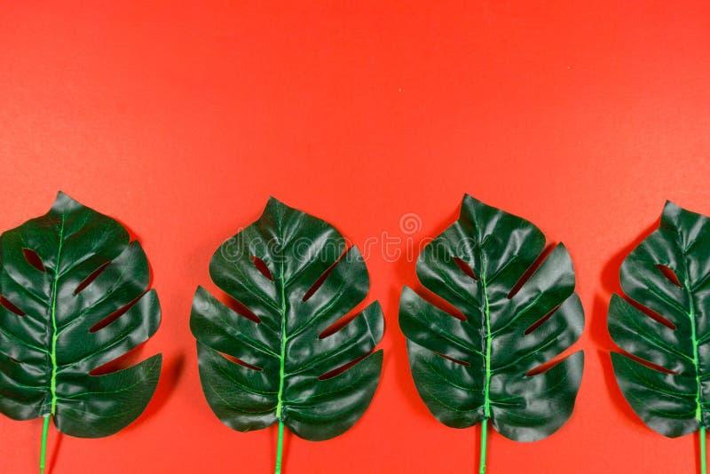 Folhas tropicais Monstera no fundo vermelho Configura??o lisa, vista superior fotos de stock