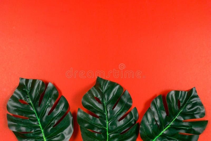 Folhas tropicais Monstera no fundo vermelho Configura??o lisa, vista superior fotografia de stock